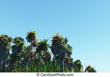 Palm trees on a tropical island