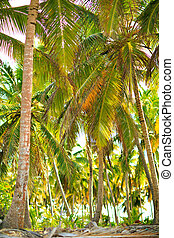 palm trees on beach by ocean. tropical climate - palm trees ...