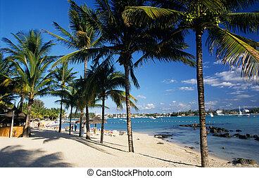 Palm trees on Grand Baie beach at Mauritius Island, Indian...