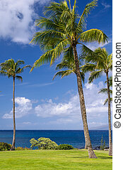 Palm Trees On Hawaiian Coast
