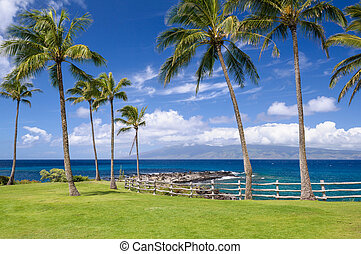 Palm Trees On Hawaiian Coast