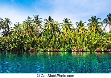Palm trees on sea shore at beautiful sunny day.