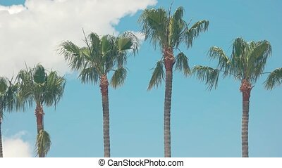Palm trees on sky background.