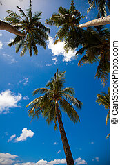 Palm trees on the background of a blue sky.