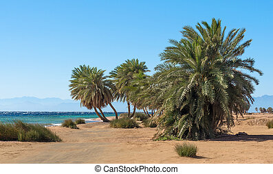 palm trees on the background of the Red Sea and the high rocky mountains in Egypt