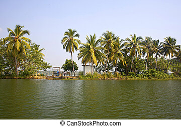 Palm trees on the backwaters of Kerala, India
