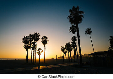 Palm trees on the beach at sunset in Santa Monica, California.