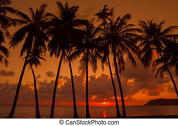 Palm trees on the beach at sunset light