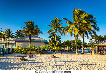 Palm trees on the beach in Fort Myers Beach, Florida.