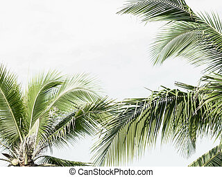 Palm trees on the beautiful sunset background. Coconut trees against light sky. Palm trees at tropical coast, stylized. Copy space