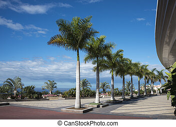 palm trees on the boulevard