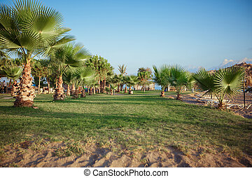 Palm trees on the green grass