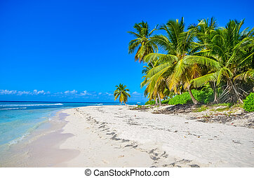 Palm trees on the ocean on a beautiful Sunny day