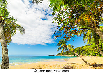Palm trees on the sand in La Perle beach