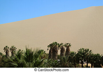 Palm trees on the shore of oasis lagoon against the sand dunes of Huacachina desert, Ica, Peru