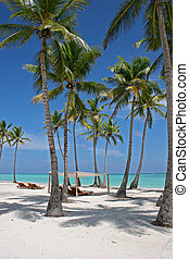 A beautiful view of tall palm trees on a sunny tropical Caribbean Beach in Dominican Republic
