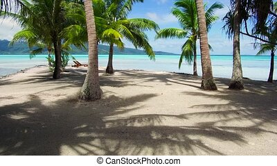 palm trees on tropical beach in french polynesia
