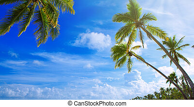 Palm trees on tropical beach. Travel background.