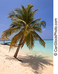 Palm trees on tropical island at ocean. Maldives