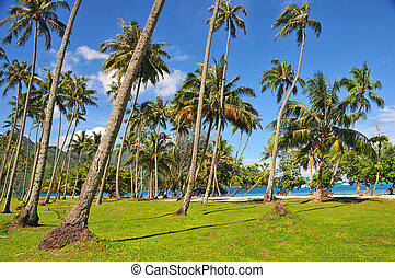 Palm trees on tropical island