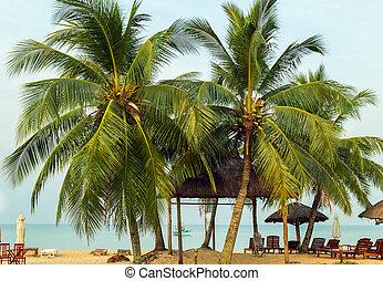 Palm trees or beach