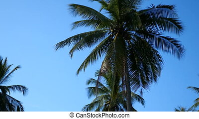 Palm trees over blue sky background. Sunny tropical summer...