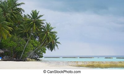 Palm Trees over Pristine Tropical Beach in the Maldives - ...