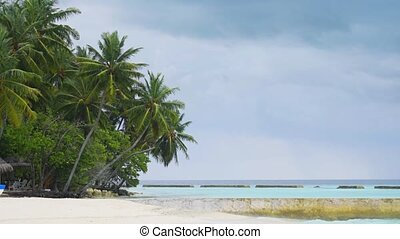 Palm Trees over Pristine Tropical Beach in the Maldives