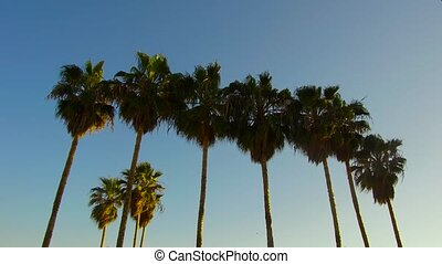 palm trees over sky at venice beach, california - nature and...
