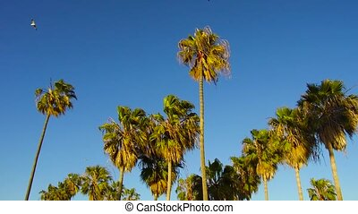 palm trees over sky at venice beach, california - summer...