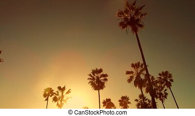 palm trees over sun at venice beach, california - nature and...