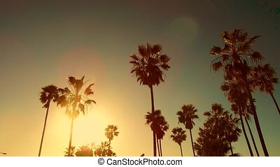 palm trees over sun at venice beach, california - summer...
