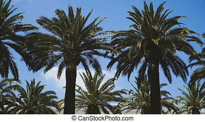 Palm trees. Palm trees against the blue sky
