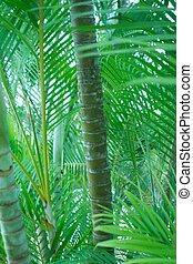 Palm Trees - Palm trees