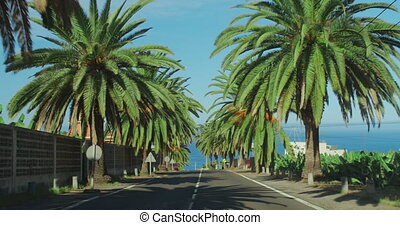 Palm trees passing by a blue sky. Driving through the sunny Beverly Hills. Los Angeles, California