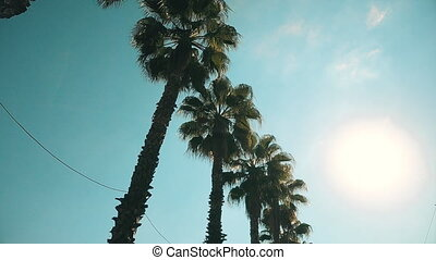 Palm trees passing by a blue sky. High quality 4k footage
