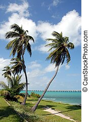 Palm Trees - photographed palm tree at Key West Florida ...