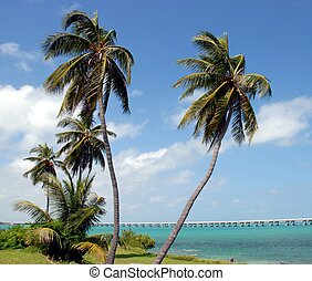 Palm Trees - photographed palm trees at Key West Florida