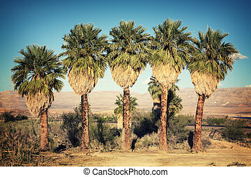 Palm trees retro - A row of palm trees in the desert, Lake...