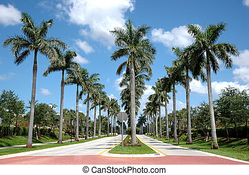Palm Trees - Rows of palm trees along two roads