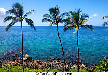 Palm trees set against clear blue tropical water