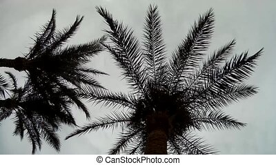 Palm Trees silhouette against cloudy Sky