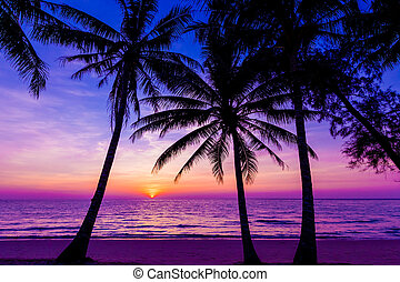 Palm trees silhouette at sunset. sunset and beach. Beautiful sunset above the sea
