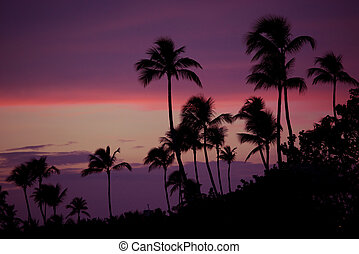 Palm trees silhouette at sunset tropical beach. Orange sunset.