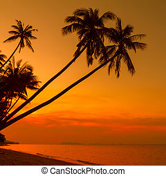 Palm trees silhouette on beach