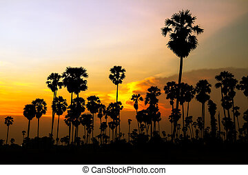 palm trees silhouette on beautiful sunset