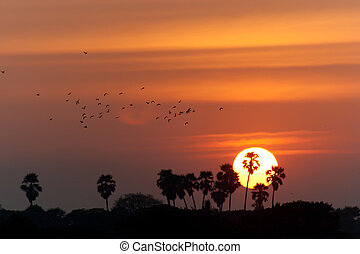 palm trees silhouette on sunset