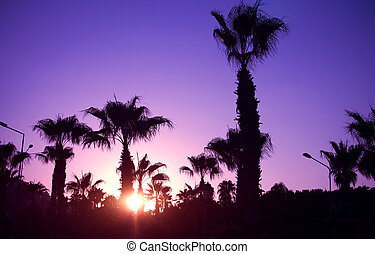 Palm trees silhouette on sunset tropical beach
