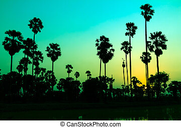palm trees silhouette on beautiful sunset background