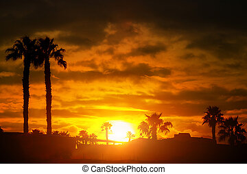 Palm trees silhouette sunset or sunrise